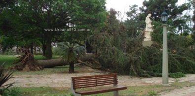 Árbol caído en plaza 25 de mayo.